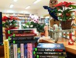 Novinky v Městské knihovně z literatury pro dospělé image